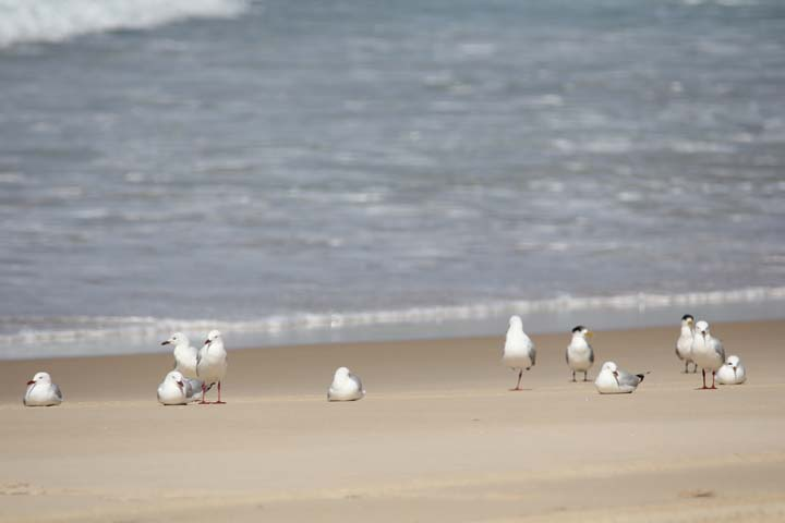 Need a photo of the local seagulls as normal!